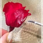 花びらにも塗る[1]