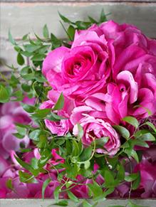 bouquet_curriculum12