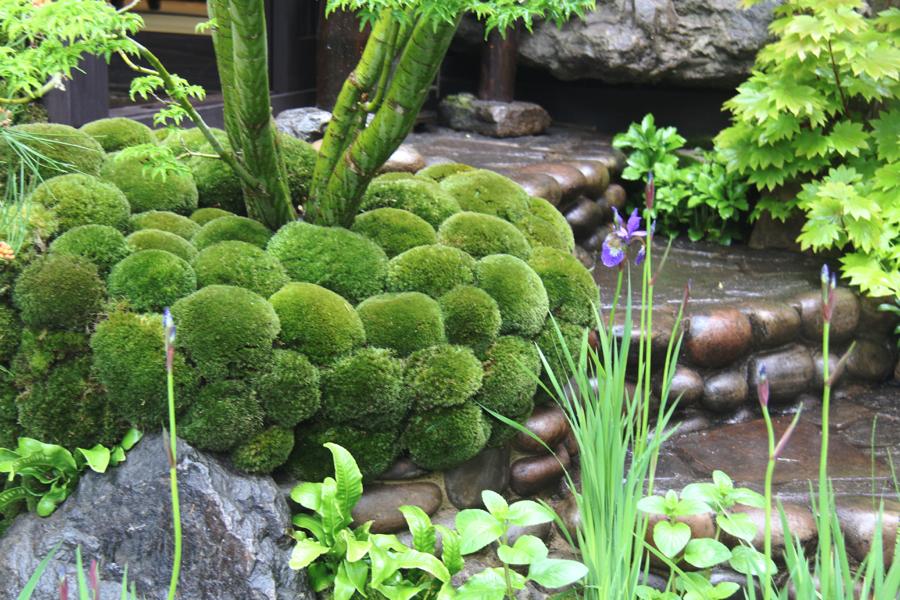Trends-Japanese-moss-balls