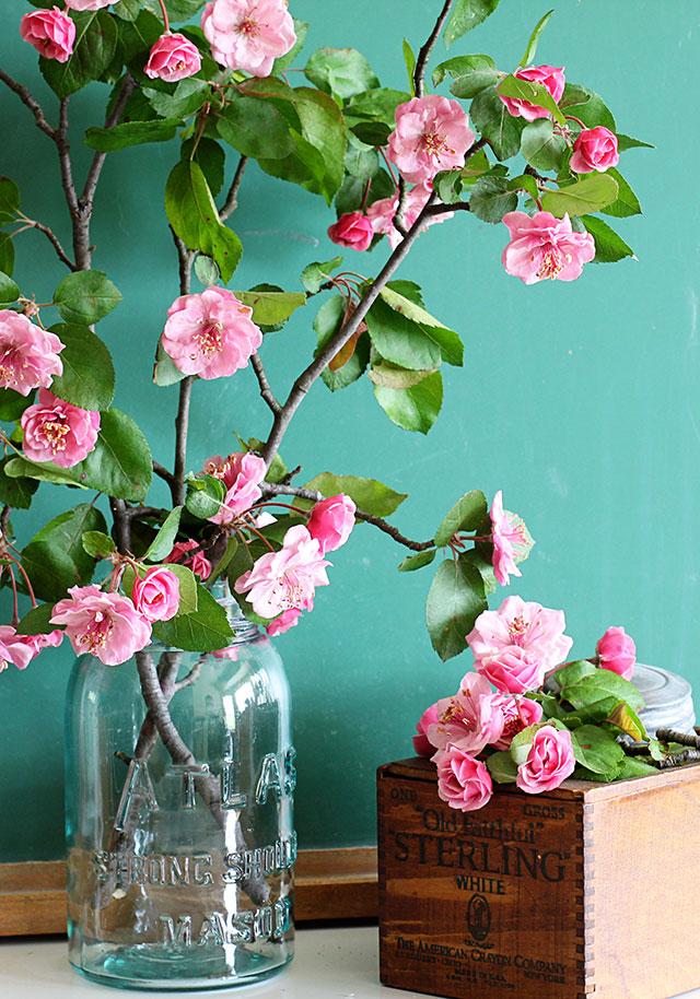 Crabapple-Blooms-4155